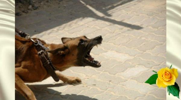 как собаки распознают плохих людей