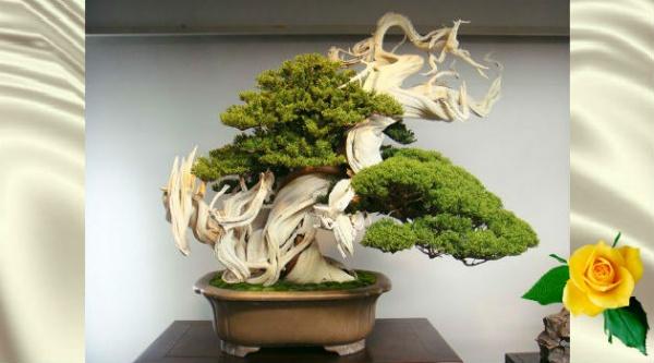 Деревья бонсай невероятной красоты — 30+ фото