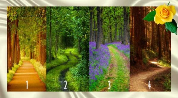 Эти лесные тропы расскажут вам о том, как вы справляетесь с трудностями