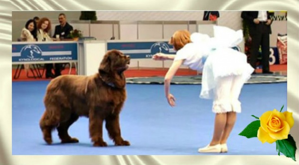 Посмотрите на реакцию пса, когда девушка сделала перед ним реверанс