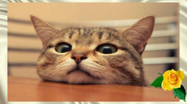 Смешная история из жизни: ответ хозяйки кота рассмешил всю очередь
