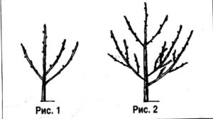 Обрезка плодовых деревьев в марте