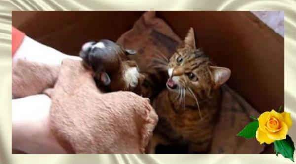 Посмотрите, как мама кошка отреагировала на щенка