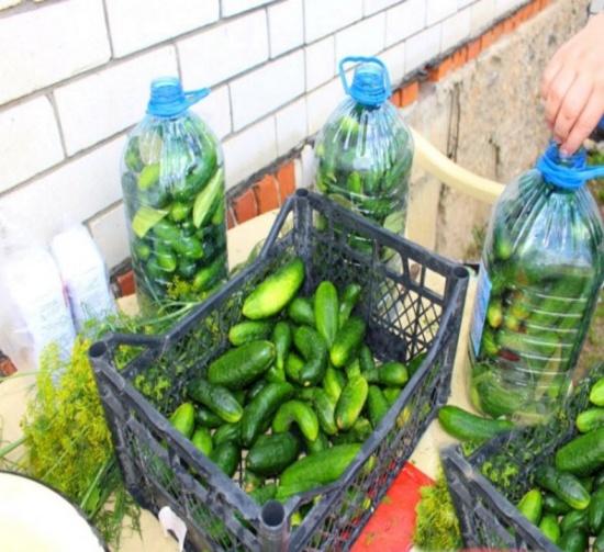 Рецепт солёных огурчиков в пластиковой бутылке