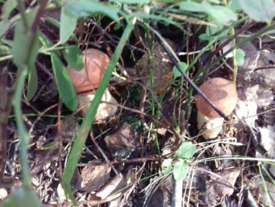 Прямо из лесочка маринованные грибочки